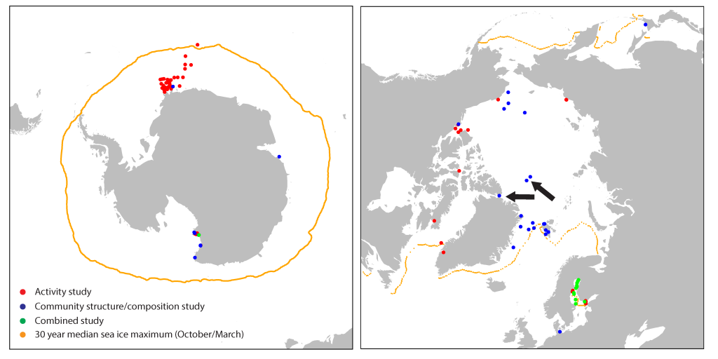 Taken from Bowman, 2015. Sampling locations for sea ice studies that have collected community structure data (blue), ecological physiology data (red), and both (orange). Note the strong sampling bias, particularly in the Antarctic. The black arrows point to the locations of the two community structure studies (at the time of writing) that we sufficiently deep to actually describe community structure.