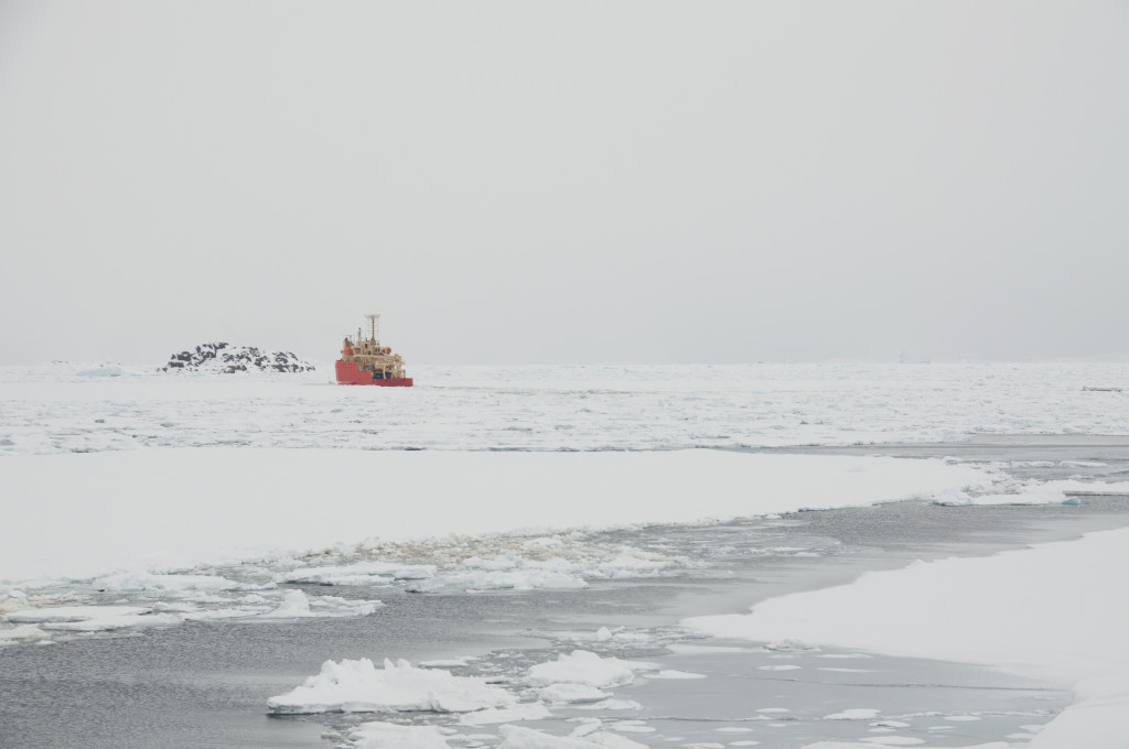 The ice is, or was, pretty thick in Arthur Harbor. 45 minutes after the Gould departed they'd made it this far. Eventually they cleared the harbor and made it to more open water.